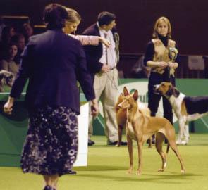Vega in the hound group. Photo: Karl Donvil