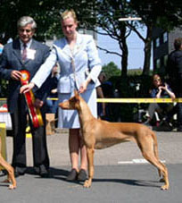 Glimma BOB at the World Dog Show in Dortmund
