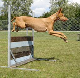 Nahla_jump