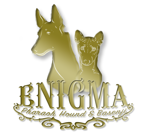 Kennel Enigma